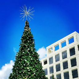 holidays holidays2016 christmastree