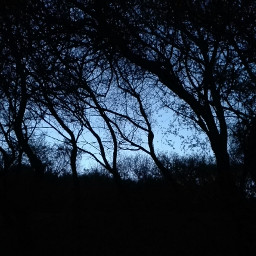 darkness fear nightshot