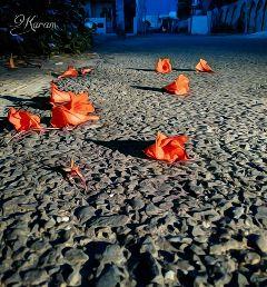 photography myclick little oilpainting flowers