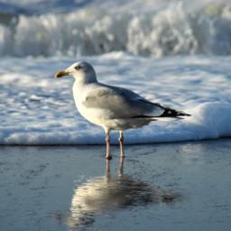 photography nature northsea seagull bird