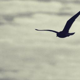 nature bird sky