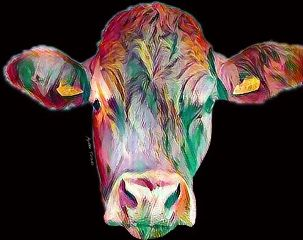 cow colorful animals contrast simple
