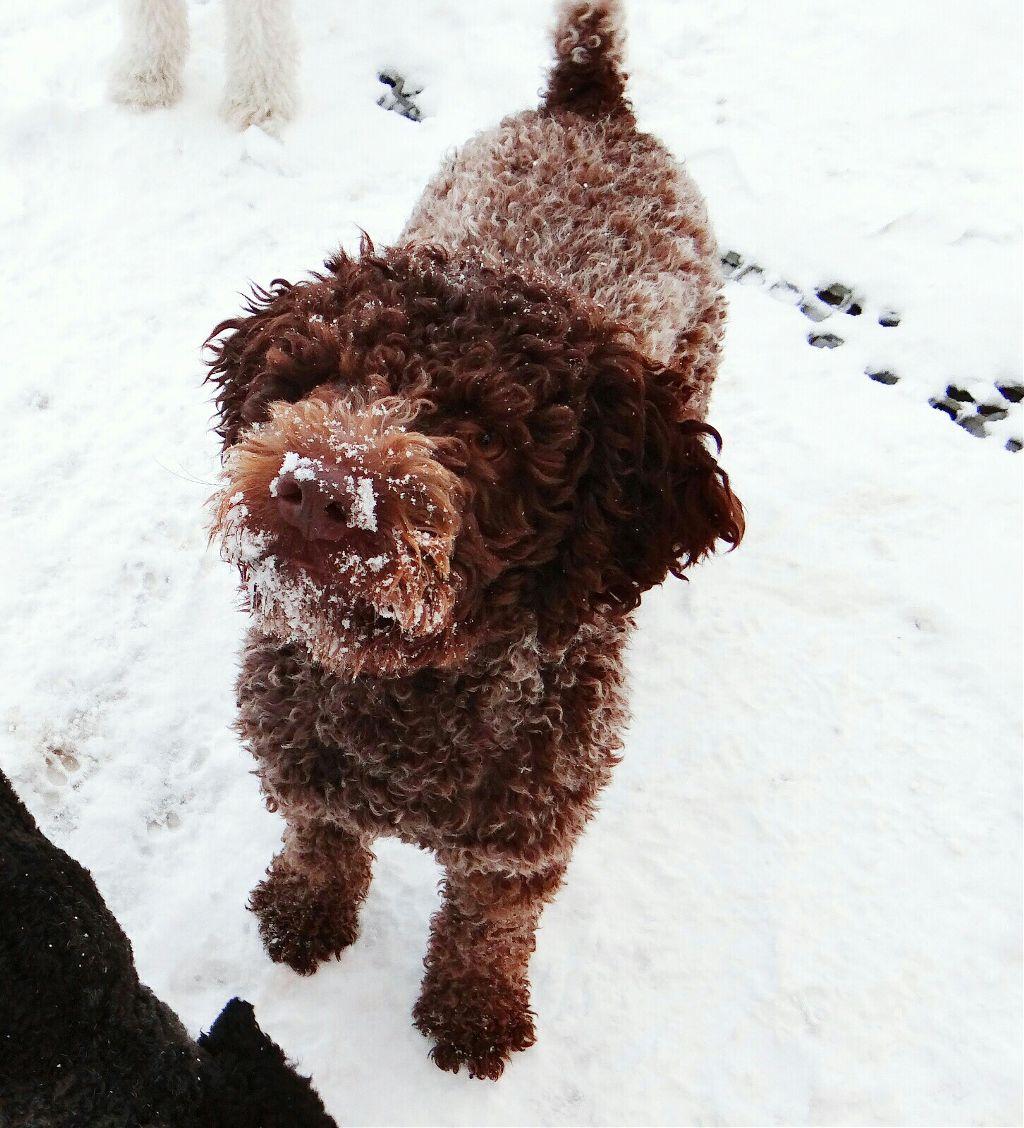 #dog #snow #playing  #coldweather  #happiness  #fun #enjoy winter #