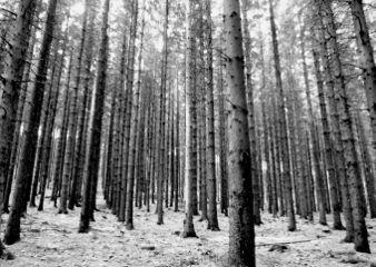 blackandwhite lines forest trees myshot freetoedit