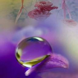 freetoedit flower doubleexposure dropsofrain