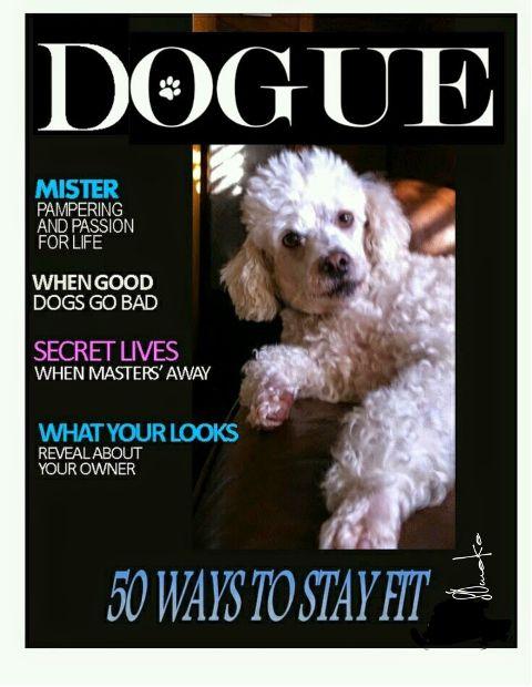dogue freetoedit cute doguesofficial originalphoto