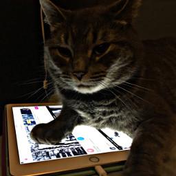 cat create creative luna lovebug freetoedit