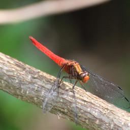 insect macrophotography macro macrophoto macroshot