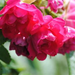 dpcflowers