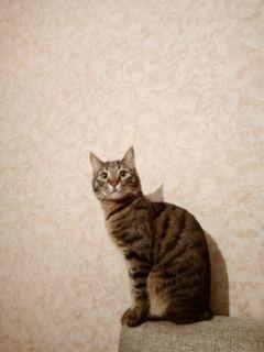 freetoedit remixme catlove catsofpicsart theonlycatilove