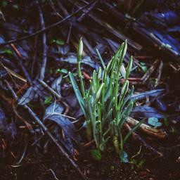 nature spring flower dark moody