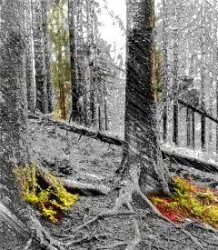 freetoedit emptyforest