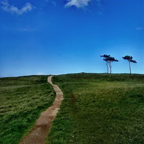 asturias nature photography trees hdr freetoedit