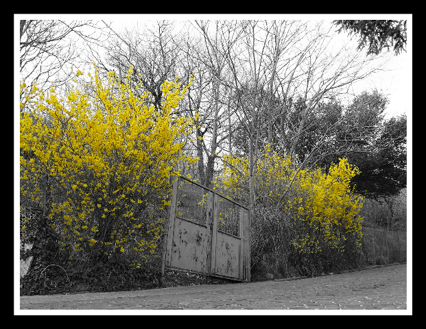 photography colorsplash yellow old nature